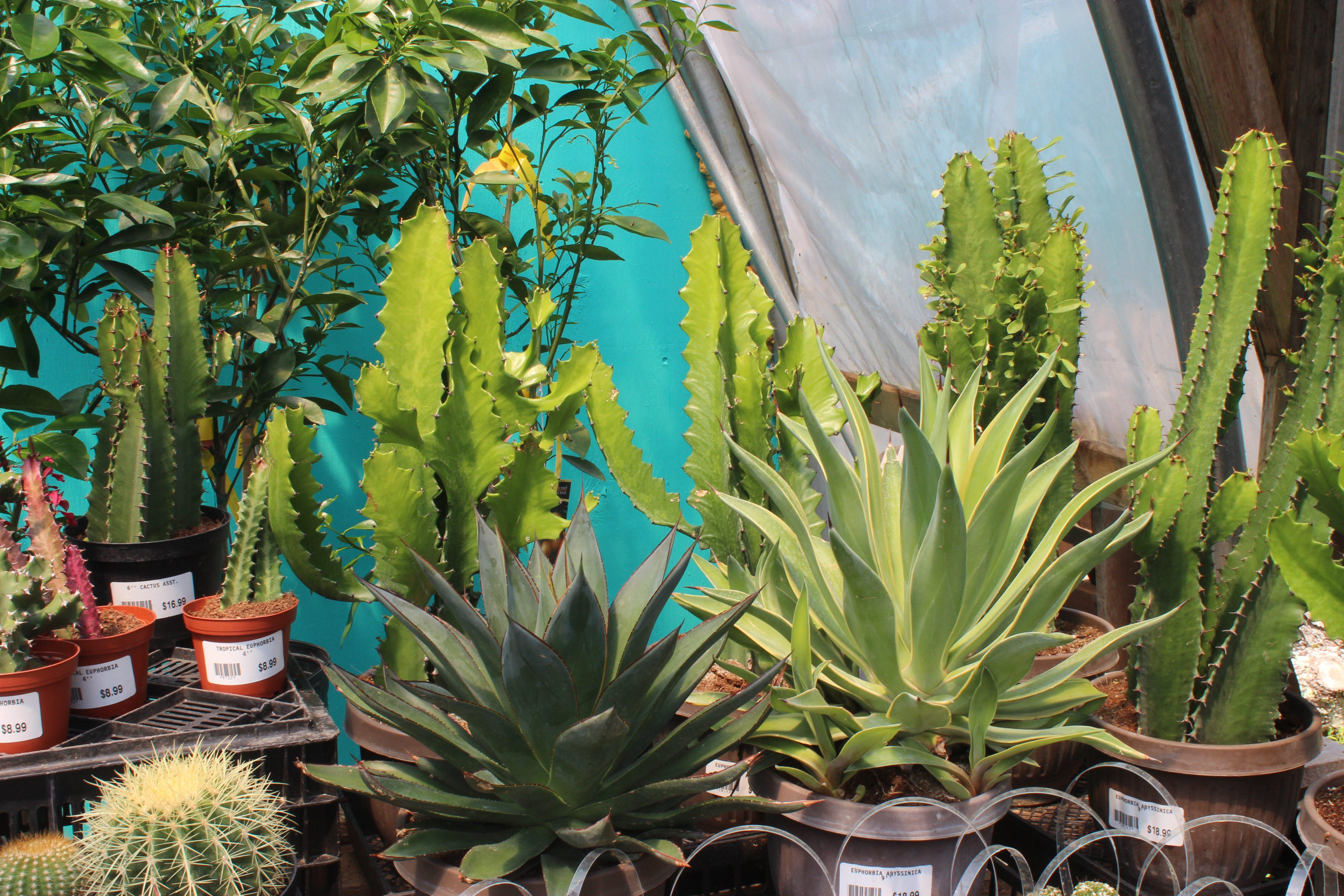 Tropical Plants Nova Scotia