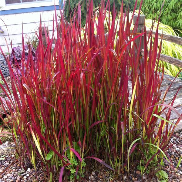 Grasses Nova Scotia
