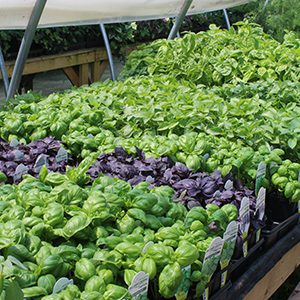 Fresh Herbs Nova Scotia