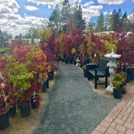 Trees Nova Scotia