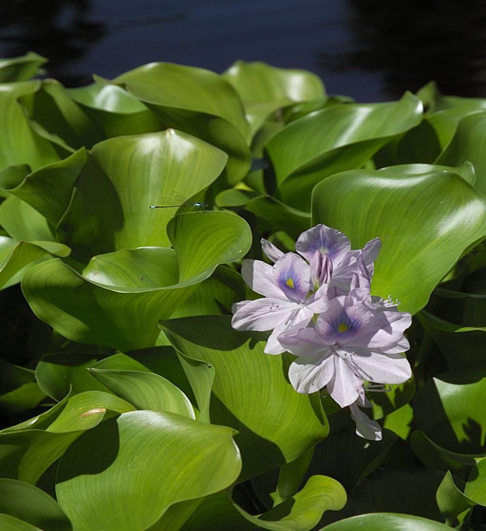 Water Plants Nova Scotia