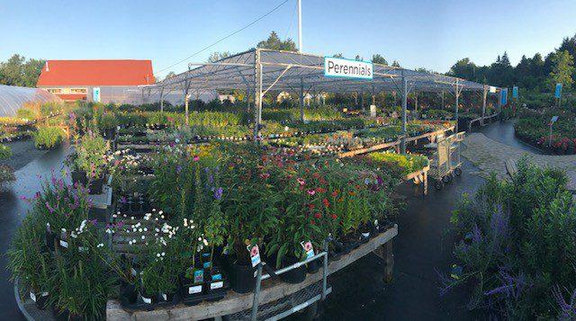 Perennials Nova Scotia